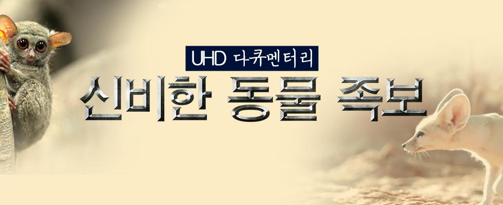 UHD 다큐멘터리 <신비한 동물 족보> | 7월 20일 (토) 첫 방송