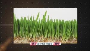 스튜디오에서 나눠 먹은 음료의 주 성분은 밀싹이에요. <br>밀싹은 비타민 A와 C가 풍부해 미백에 효과적이라고 해요.