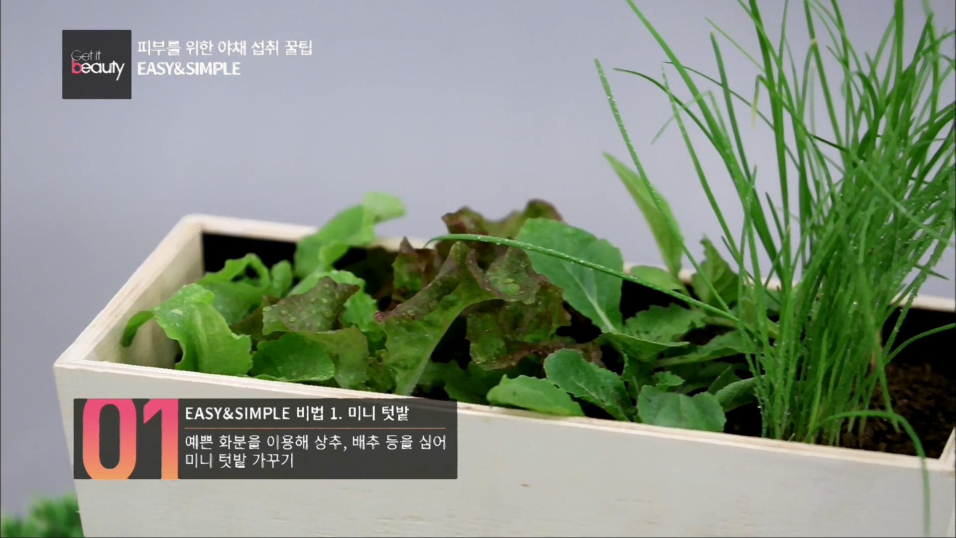 EASY & SIMPLE 비법 1.미니텃밭 예쁜 화분을 이용해 상추, 배추 등을 심어 미니 텃밭 가꾸기