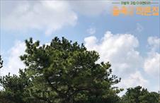 오늘 숲 속 날씨는 맑음~